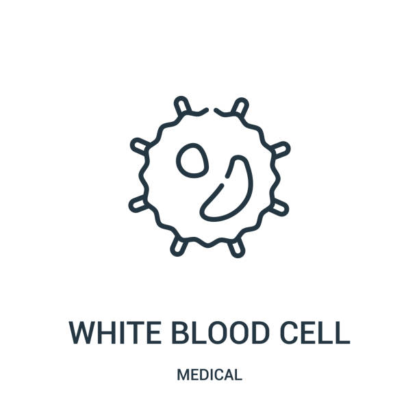 white blood cell icon vector from medical collection. Thin line white blood cell outline icon vector illustration. white blood cell icon vector from medical collection. Thin line white blood cell outline icon vector illustration. Linear symbol for use on web and mobile apps, logo, print media. white blood cell stock illustrations