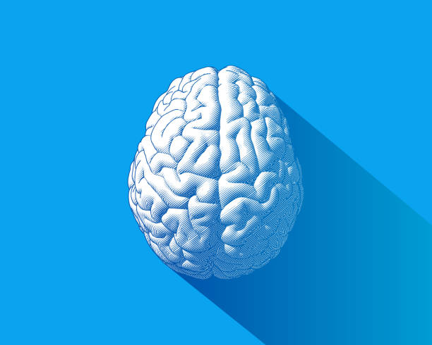 White brain illustration isolated on blue BG Brain engraving drawing top view isolated on blue background in striped line style with long shadow illustration brain stock illustrations