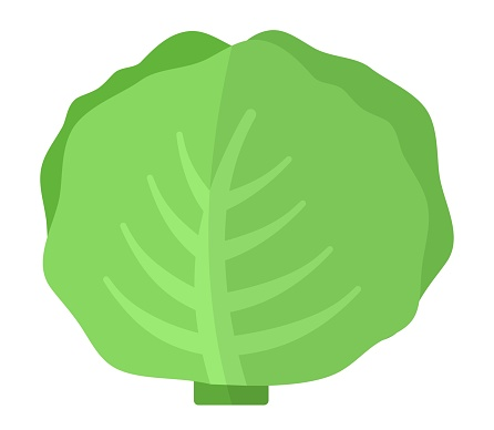 White cabbage head vector icon flat isolated