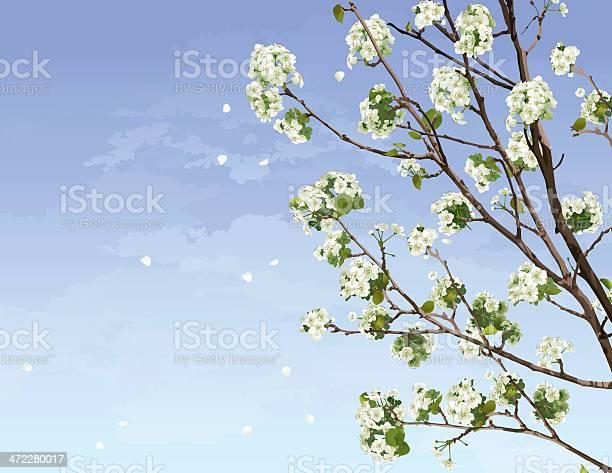 White cherry blossoms vector id472280017?b=1&k=6&m=472280017&s=612x612&h=bt9haku3mxlc5iuth kyomlnxibdc0csxcm87nnlwdq=