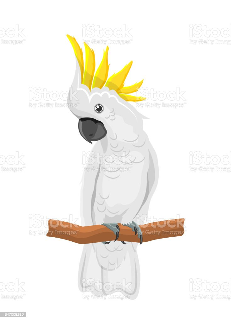 White Cockatoo Parrot On Branch, Exotic Bird with Crest Isolated vector art illustration