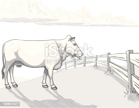 Hand drawn white cow in pasture, standing at fence, eating grass, with puffy cumulus clouds in the distance. Outline, hatch shading and watercolor-style shading are organized in separate layers and all in Global grayscale colors for ease of use. 4 clipping paths included to provide complete shapes (over these layers: Hatch shadow, Solid shadow, Clouds, Fence). Included files: EPS8, AI CS3, High res' JPEG, transparent PNG (without sky).