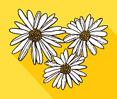 Vector illustration of three white daisies with shadow on a yellow background.