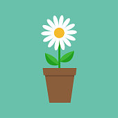 White daisy chamomile in pot. Cute flower plant collection. Love card. Camomile icon Growing concept. Flat design. Green background. Isolated. Vector illustration