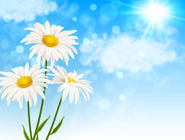 white daisy flowers and clouds - нивяник stock illustrations