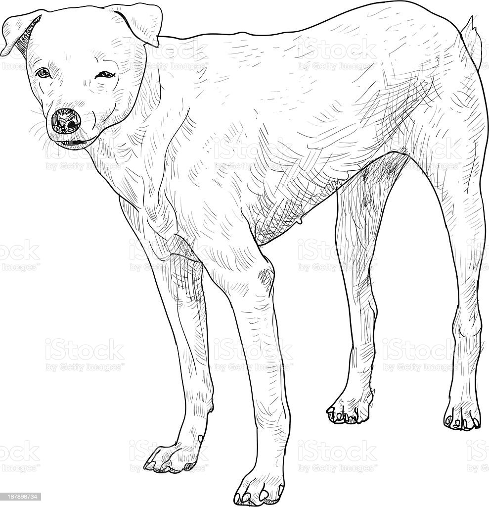 White dog vector art illustration