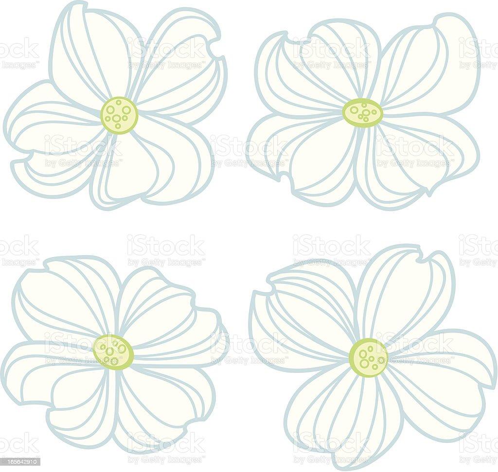 White Dogwood Flowers Stock Vector Art More Images Of Blossom