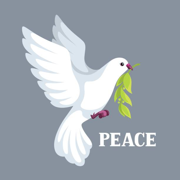 White dove of peace bears olive branch White dove of peace bears olive branch. pigeon stock illustrations