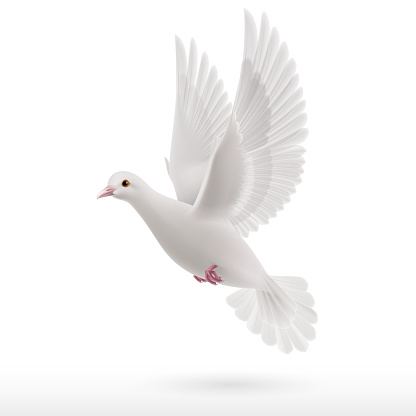 White Dove Stock Illustration - Download Image Now - iStock
