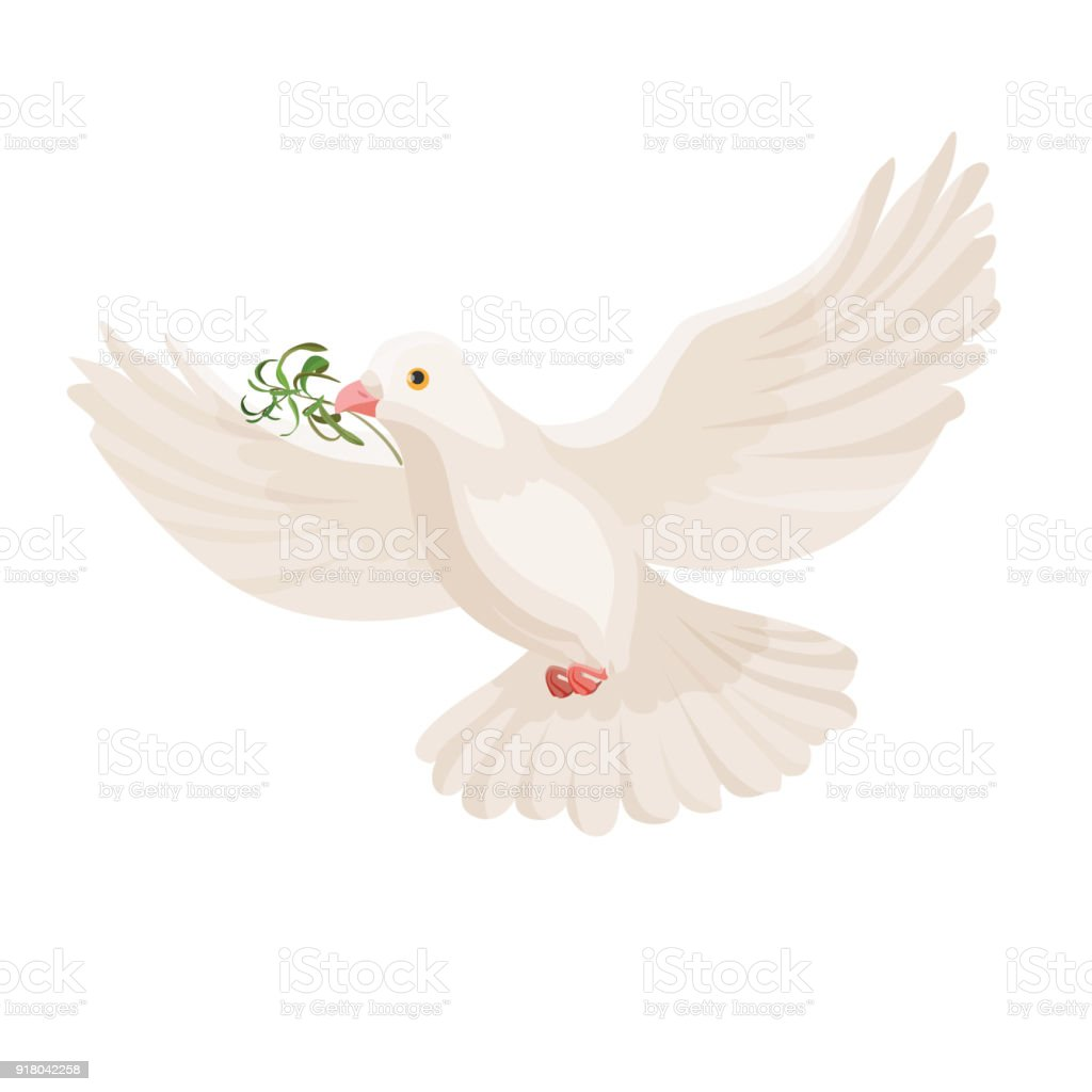 White dove with grass in beak vector flying bird isolated vector art illustration