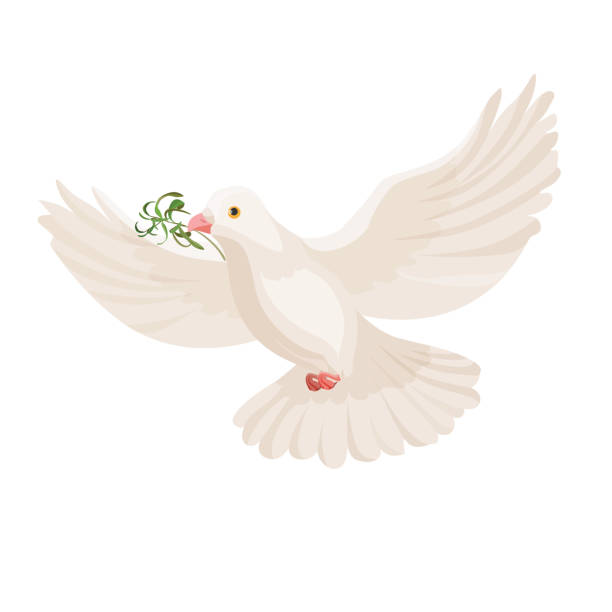 White dove with grass in beak vector flying bird isolated White dove with grass in beak vector flying bird isolated on light background. Pigeon with plant flying with wide open wings and carrying food bird clipart stock illustrations