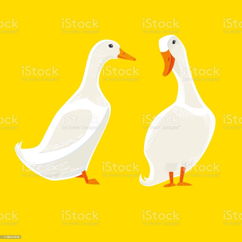 White Ducks - Royalty-free American Pekin Duck stock vector