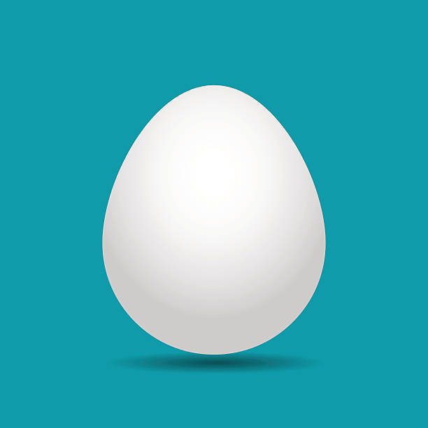 stockillustraties, clipart, cartoons en iconen met white easter egg with shadow - egg
