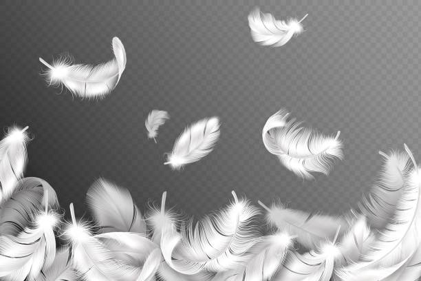 illustrazioni stock, clip art, cartoni animati e icone di tendenza di white feathers background. falling flying fluffy swan, dove or angel wings feather, soft bird plumage. style flyer vector concept - piume colorate