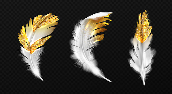 White feathers with gold glitter on edges, plumage