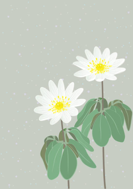 White field flower vector art illustration