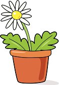 White flower in pot
