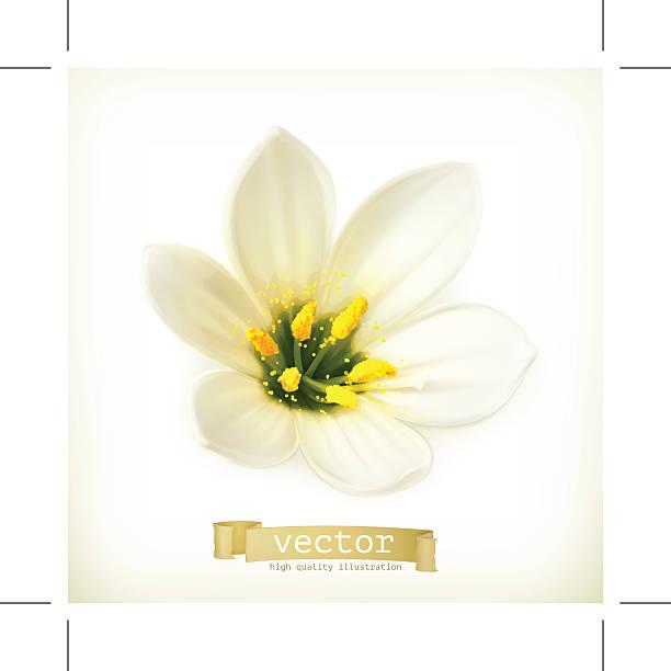 stockillustraties, clipart, cartoons en iconen met white flower, vector illustration - meeldraad
