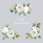 Vector illustration of white roses. Watercolor flowers.