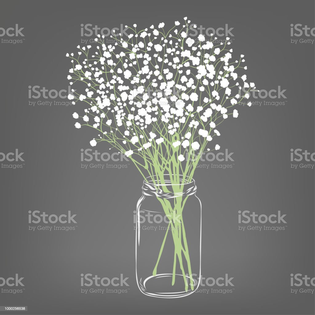 White Flowers Bouquet Gypsophila Flowers Transparent Clear Glass Jar Grey Background Vector Illustration Stock Illustration Download Image Now Istock