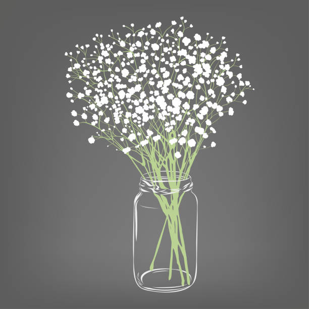 White flowers bouquet. Gypsophila flowers. Transparent clear glass jar. Grey background. Vector Illustration. White flowers bouquet. Gypsophila flowers. Transparent clear glass jar. Grey background. Vector Illustration. bunch stock illustrations