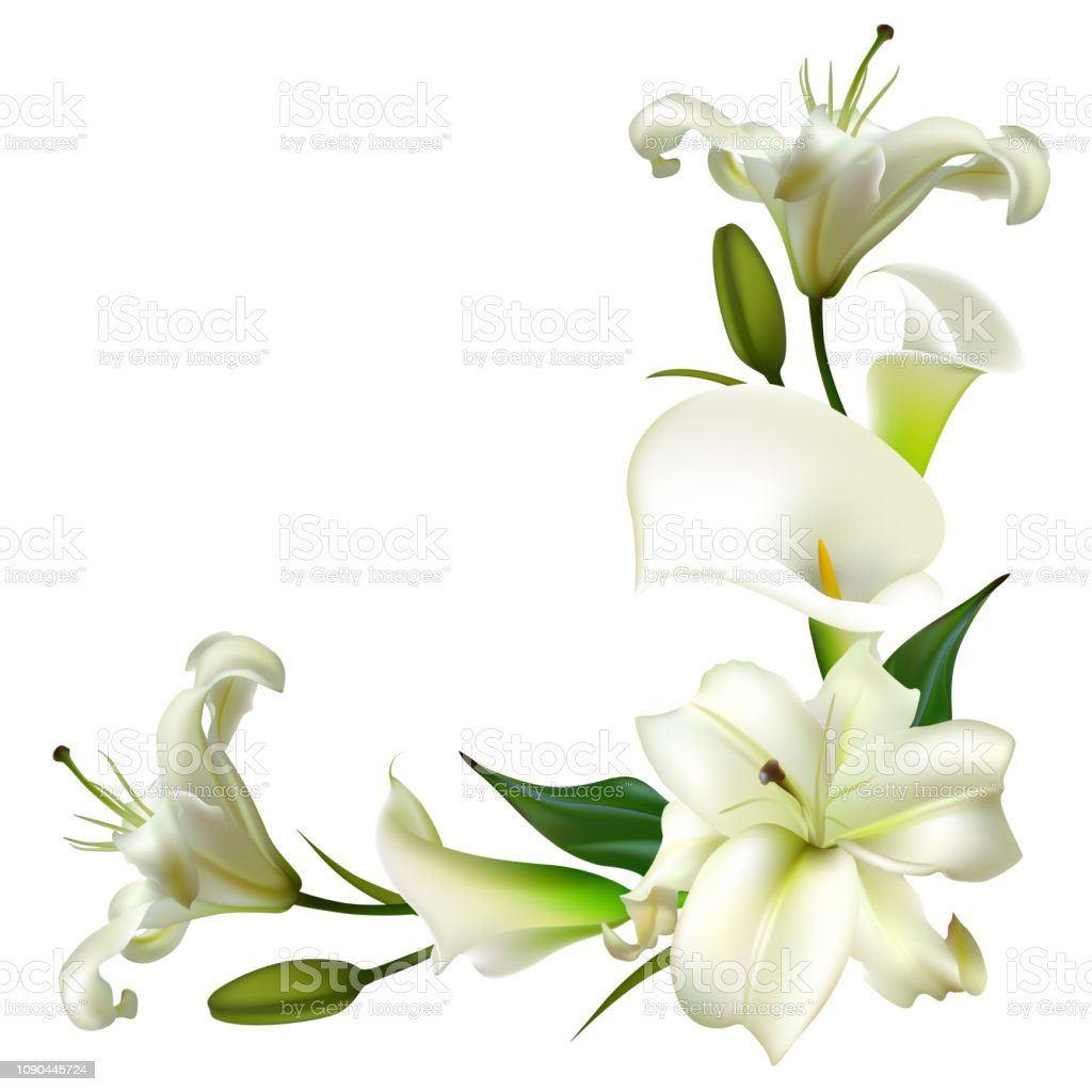 White Flowers Floral Background Calla Lilies Green Leaves Stock  Illustration - Download Image Now - iStock