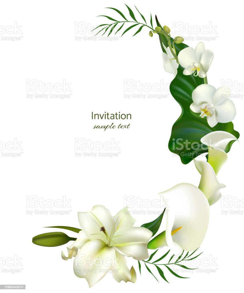 White Flowers Flower Background Calla Lilies Orchids Green