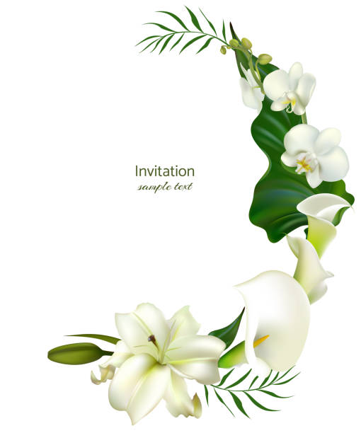 White flowers. Flower background. Calla. Lilies. Orchids. Green leaves. Wedding invitation. White flowers. Flower background. Calla. Lilies. Orchids. Green leaves. Wedding invitation. lily stock illustrations