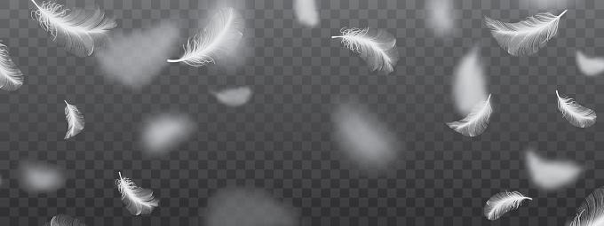 White Flying Bird Feathers Pattern On Dark Background - Stockowe grafiki wektorowe i więcej obrazów Anioł