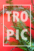 White Frame with Fern Foliage in front of a Red Wall Background. Tropical Background, Summer Concept. Fern Foliage Background. Elegant Background for Invitation and Greeting Cards.