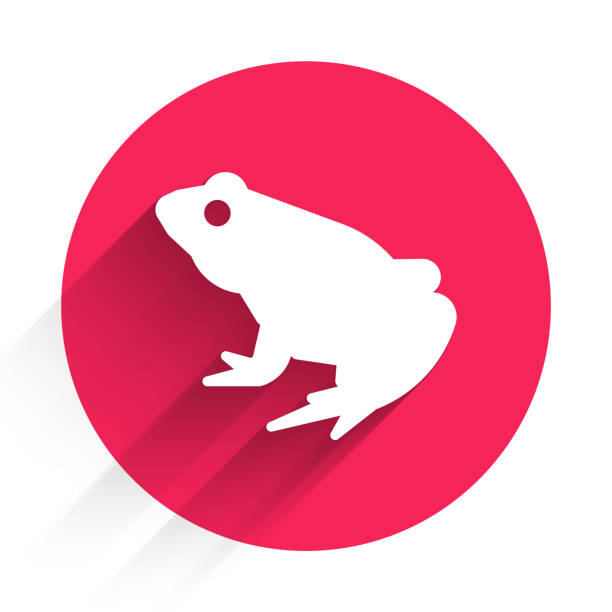 White Frog icon isolated with long shadow. Animal symbol. Red circle button. Vector White Frog icon isolated with long shadow. Animal symbol. Red circle button. Vector. amphibians stock illustrations