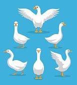 White Goose Poses Cartoon Vector Illustration