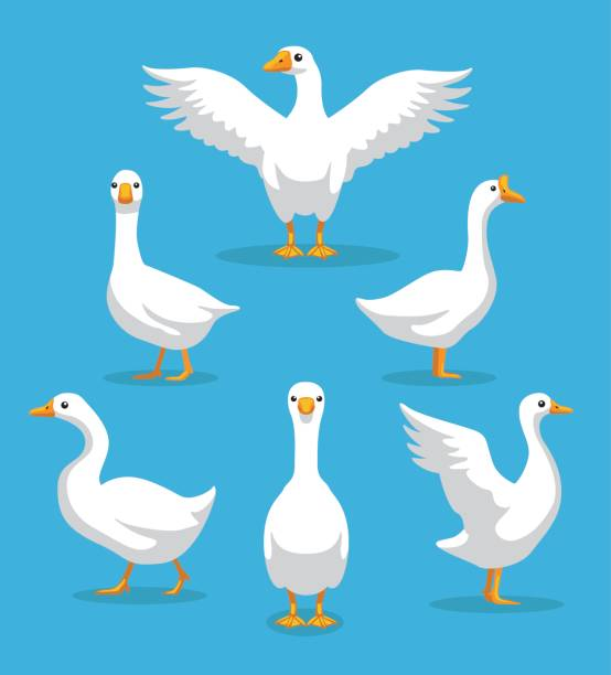 White Goose Poses Cartoon Vector Illustration Animal Character EPS10 File Format goose bird stock illustrations