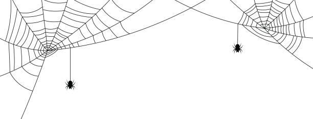 bildbanksillustrationer, clip art samt tecknat material och ikoner med vitt halloween banner med spindelnät och spindlar. - halloween background