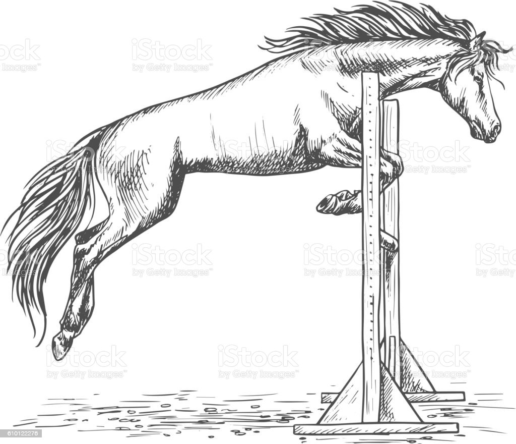White Horse Jumping Over Barrier Sketch Portrait Stock Illustration Download Image Now Istock