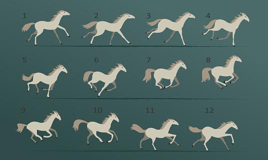 White horse running animation. Twelve key positions of horse running. Vector illustration isolated on white background.