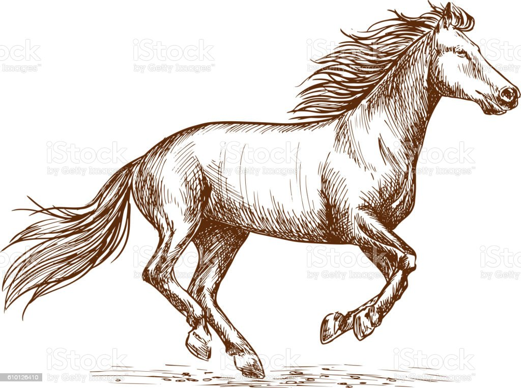 White horse running gallop sketch portrait vector art illustration