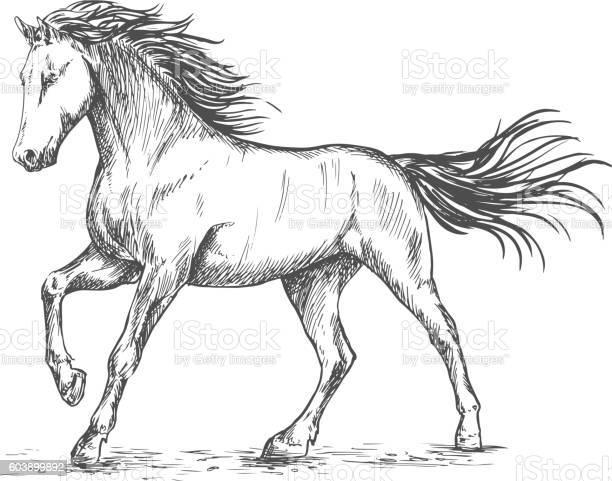 White horse with stamping sketch portrait vector id603899892?b=1&k=6&m=603899892&s=612x612&h=srlwienn5rcnhapfkbpvhhd5rwnuin90o 9tss1ipxw=