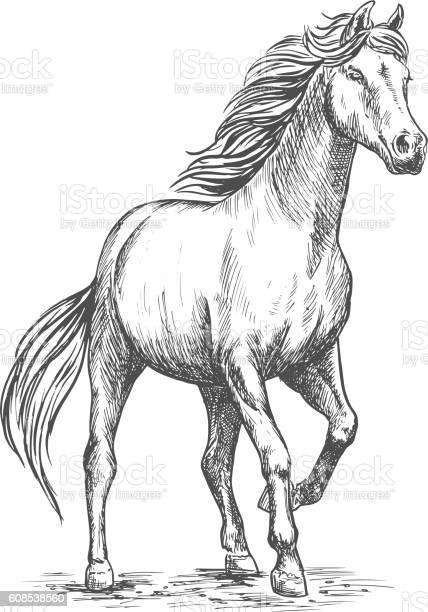 White horse with stomping hoof portrait vector id608538560?b=1&k=6&m=608538560&s=612x612&h=qfo2wp 1wx0nvb2bp nmegd5gzkm pcpeh7wnbwogdc=