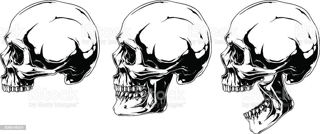 white human skull in profile projection set stock vector art more rh istockphoto com Military Skull