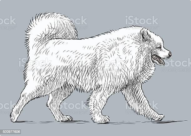 White husky vector id520977606?b=1&k=6&m=520977606&s=612x612&h=ndownqqapxdgj50shap gfubaeool2tbdxqmhzcl358=