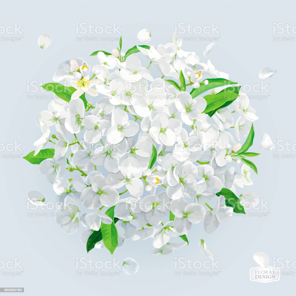 White Hydrangea Flower With Leaves Vector Drawing Stock Vector Art