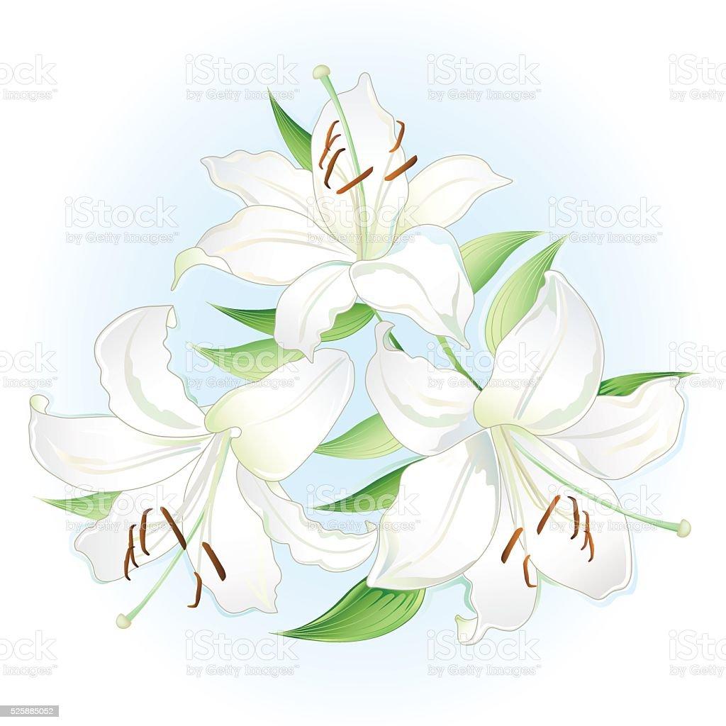 Blanco lilies bouquet - ilustración de arte vectorial