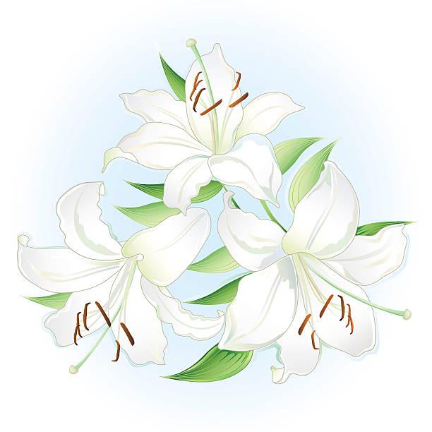weiße lilien bouquet - inkalilie stock-grafiken, -clipart, -cartoons und -symbole