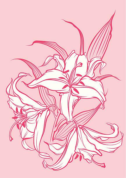 Weiße Lilien – Vektorgrafik