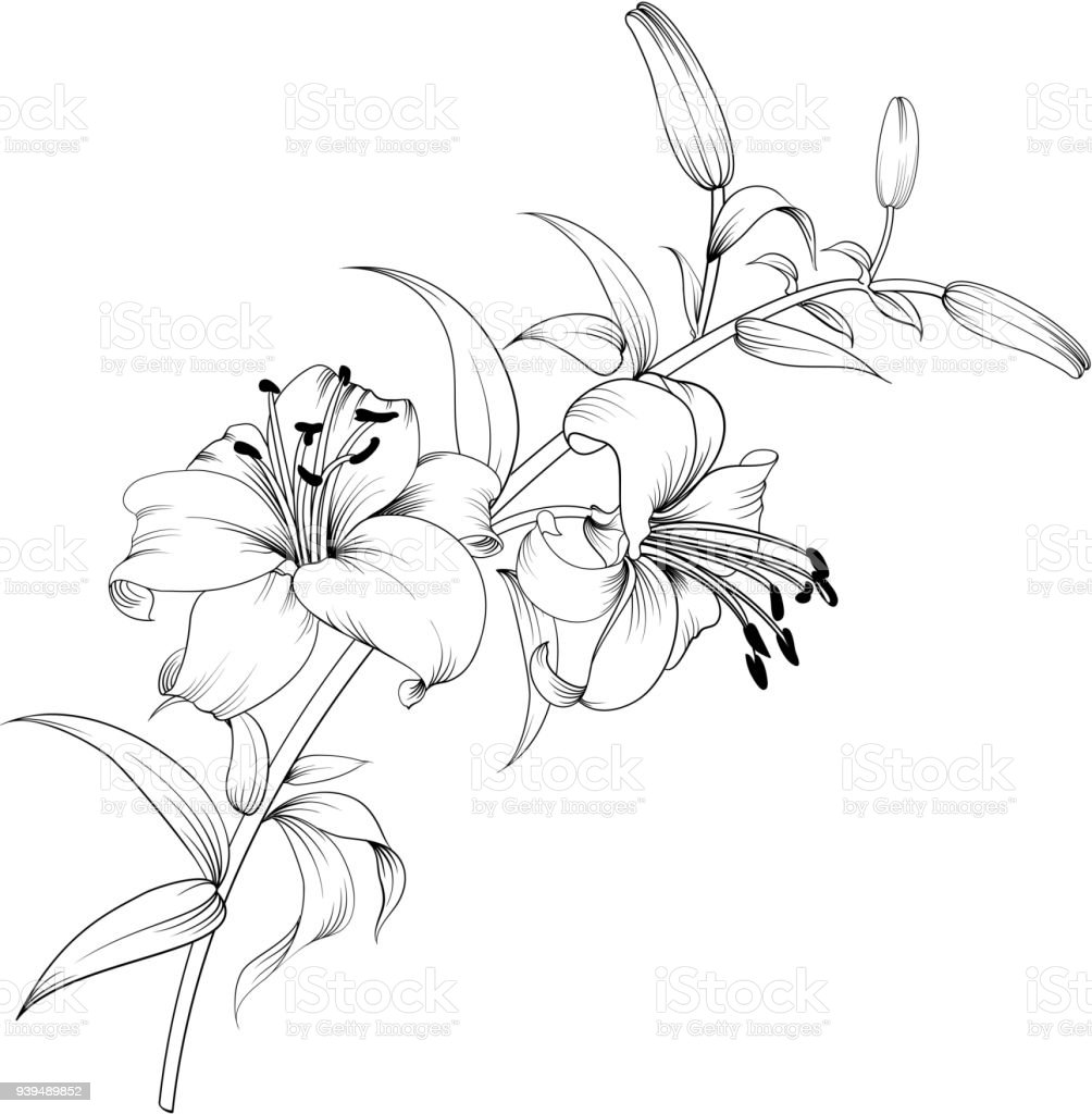 White lily flower stock vector art more images of art 939489852 white lily flower royalty free white lily flower stock vector art amp more images izmirmasajfo