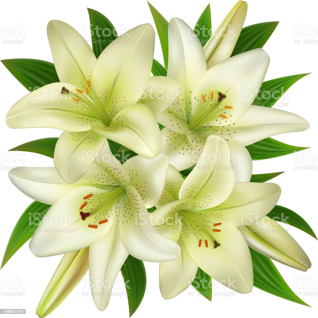 White Lily Flowers Stock Vector Art 859612734 Istock