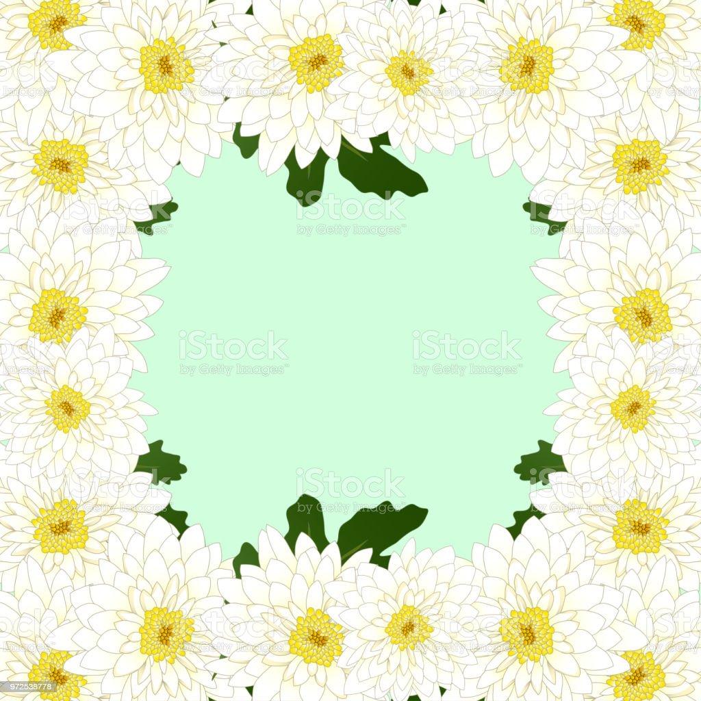 White Mum Chrysanthemum Flower Border Stock Vector Art More Images
