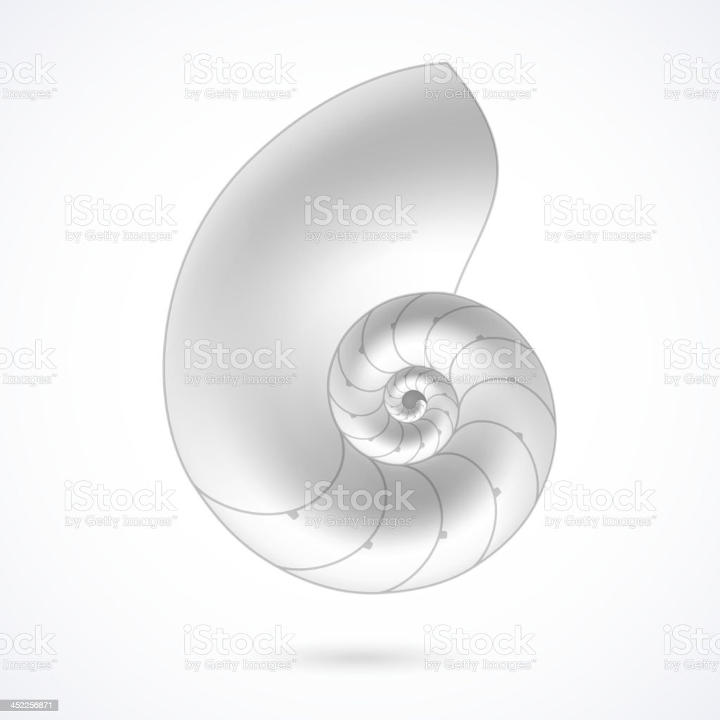 A white nautilus shell on a white background vector art illustration