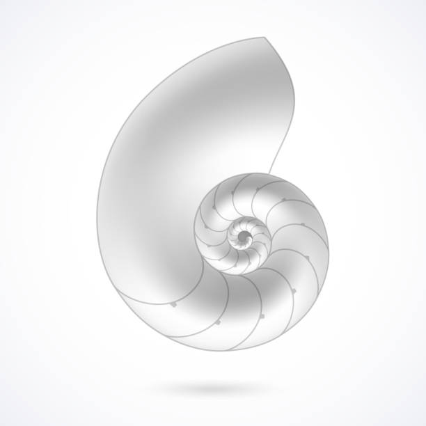 A white nautilus shell on a white background Vector illustration with transparent effect. Eps10. nautilus shell stock illustrations